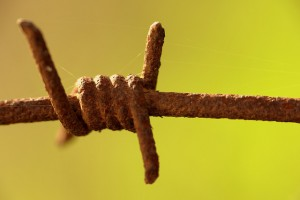 Macro image of barbed wire